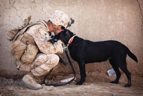 Soldiers and service dogs: a heartwarming friendship