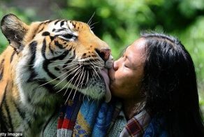 Friendship between tiger and a man
