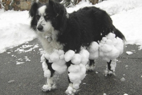 29 Dogs You Won't Believe Actually Exist