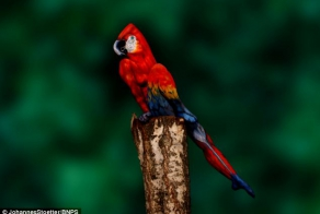 Artist paints woman's entire body to make her look like a parrot
