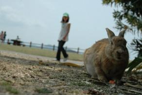 Ōkunoshima – Bunny Island