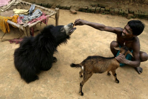 One Day A Sloth Bear Wandered Into An Indian Family's Home. It Was Ama