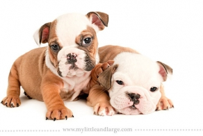 Adorable Portraits of Different Dog Breeds at 6 Weeks Old