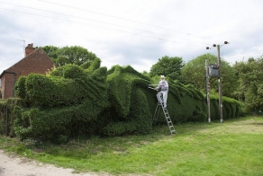 Retired Man Sculpts Giant Hedge Into a 100-Foot-Long Dragon