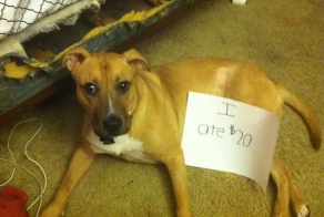 Hilarious Dogs Facing Public Shaming That Will Make You Say AwWw!