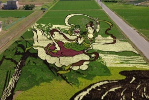 Farmers In Japan Transform Their Rice Paddies Into Living Works Of Art