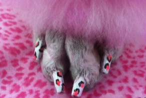 Awesome Dog Nail Art