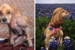 Rescue Dogs Before And After