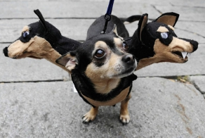 25 Terrifying Cute Halloween Costumes For Pets
