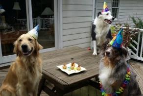 Ridiculously Happy Animals Celebrating Their Birthday