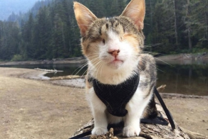 Meet Honey Bee, Who Loves Hiking