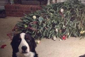 Pets VS Christmas Decorations