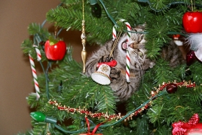 Dogs And Cats That Destroyed Christmas