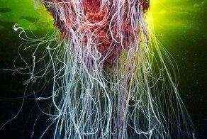 The Alien Beauty Of Jellyfish