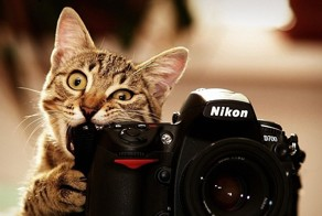 Share Pictures Of Animals Getting Comfortable With Camera Gear