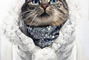 This Cat Is The Greatest Fashion Diva Of All Time