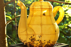 60,000 Bees Created The Most Beautiful Teapot You Will Ever See.