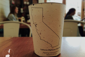 Biodegradable Coffee Cups Embedded With Seeds