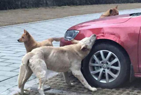 Stray Dog Kicked By Driver Returns With A Pack Of Friends
