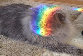 18 Pets Who Are Under Attack ... By Rainbows