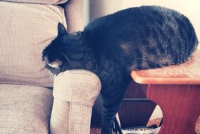 23 Cats Who Have Laziness Down To A Science