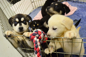 University Creates 'Puppy Room' To Help Stressed-Out Students