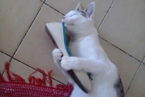 11 Cats Who Have An Unhealthy Obsession With Footwear