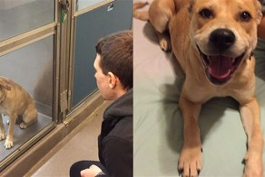 These 16 Dogs Got Out Of The Shelter, And Their Reactions Are Amazing!