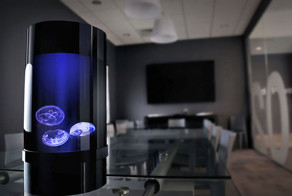 Now You Can Have Pet Jellyfish At Home