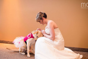 Service Dog Calms Bride Suffering From Anxiety During Her Wedding Day