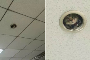 Hilarious Moment Office Workers Realize They're Being Spied On By A Cat