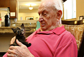 Animal Shelter Partners With Elderly Care Facility To Save Both Orphaned Kittens And Elders