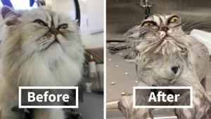 50 Hilarious Animals Before And After A Bath