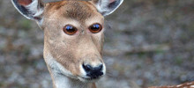 What 16 Different Animals Would Look Like If They Had Eyes At The Front