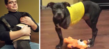 Injured Puppy Thrown Out Of Moving Car And Set To Be Put Down Gets Saved By A Loving Cop