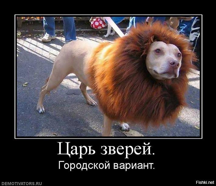 царь зверей демотиваторы российский секс-символ